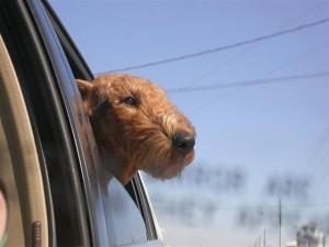 Otis on the way to the beach
