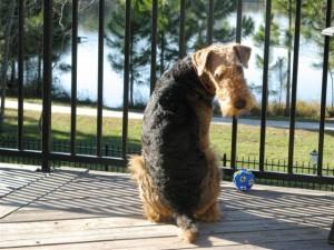 Otis guarding his back yard