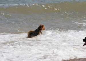 Ruby heads for the sea