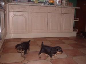 Sally puppies