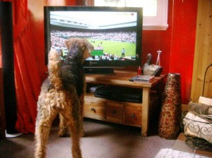 Fizzi watching Wimbledon