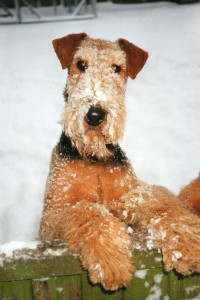 Sassie in the snow