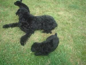 Stolie&pups1-05